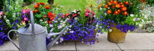 Choosing Flowers for your home