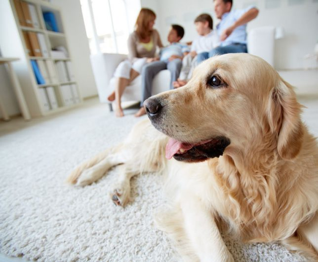 Ideas For Pet-Friendly Remodeling